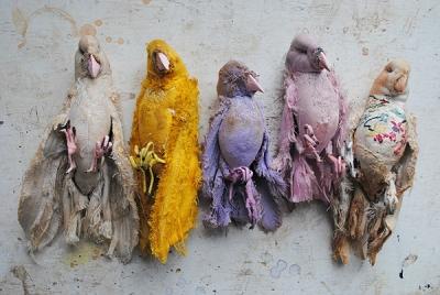 Mister Finch Birds